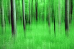 Forest Metamorphosis