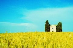 Toscana Field