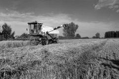 Harvesters Joy